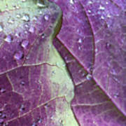 Leaves, Color,  And Dew Art Print