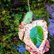 Leaves In A Pile Art Print