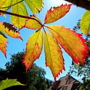 Leaves In Sunlight 4 Art Print