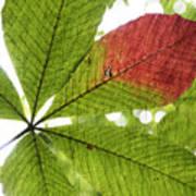 Leaves. Art Print by Itai Minovitz