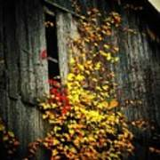 Leaves On An Old Barn Print by Joyce Kimble Smith