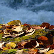 Leaves On Rock By River Art Print
