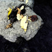 Leaves On The Rocks Art Print