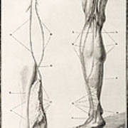 Leg Nerve, 18th Century Illustration Art Print