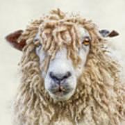 Leicester Longwool Sheep Art Print