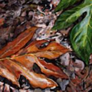 Lemai Leaves Art Print