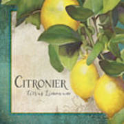 Lemon Tree - Citronier Citrus Limonum Art Print