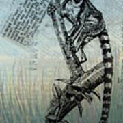 Lemur Catta Art Print