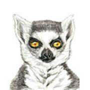 Lemur Art Print
