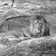 Leo The Lion..... Art Print