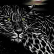 Leopard At Night Art Print