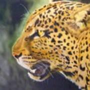 Leopard Art Print by Crispin  Delgado