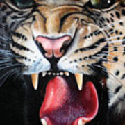 Leopard Face Art Print