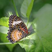 Leopard Lacewing Art Print