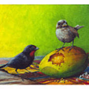Lesser Antillean Bullfinches And Mango Art Print