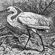 Lesser Egret Art Print