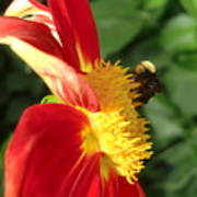 Let It Bee Art Print