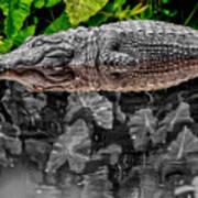 Let Sleeping Gators Lie - Mod Art Print