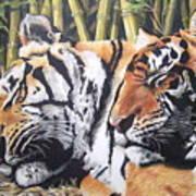 Let Sleeping Tigers Lie Art Print