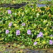 Lettuce Lake Flowers Art Print