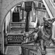 Library Dog Art Print