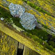 Lichen On Wood. Art Print