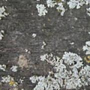 Lichen On Wood Art Print