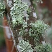 Lichens 4 Art Print