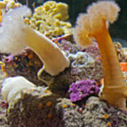 Life Under The Sea In Monterey Aquarium-california Art Print