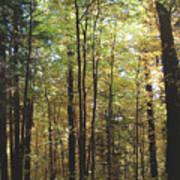 Light Among The Trees Vertical Art Print