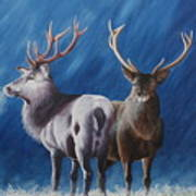 Light And Dark Stags Art Print