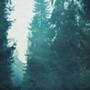 Light Coming Through Fir Trees In Mist Art Print
