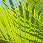 Light Green Palm Leaves Art Print