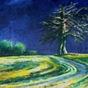 Light On A Tree Art Print