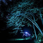 Light Painted Arched Tree  Art Print