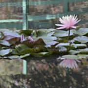 Light Pink Water Lily Art Print