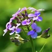 Light Purple Flowers  Art Print