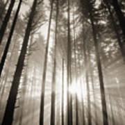 Light Through Forest Art Print