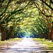 Light Through Live Oak Lane Art Print