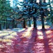 Light Through The Pines Art Print