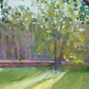 Light Through The Trees Art Print