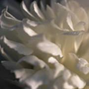 Light Wet Flower Art Print