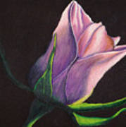 Lighted Rose Art Print