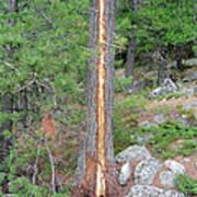 Lightning Strike On Tree Art Print