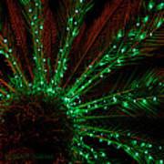 Lights Beneath The Fronds Art Print