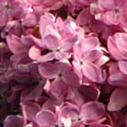 Lilac Beauty Art Print
