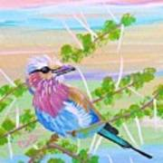 Lilac Breasted Roller In Thorn Tree Art Print