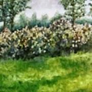 Lilac Bushes In Springtime Art Print