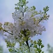 Lilac Flowers Art Print