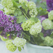 Lilacs And Snowballs Art Print